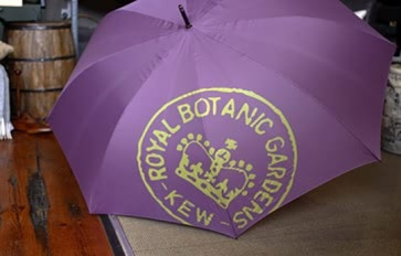 Kew large umbrella heather
