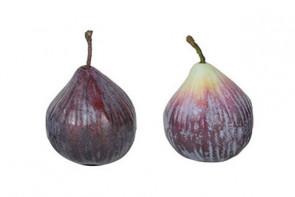 Ornamental Fig