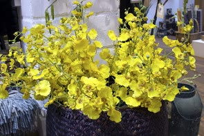 Oncidium Yellow