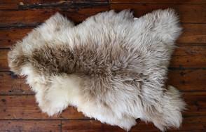 Shetland sheepskin rug