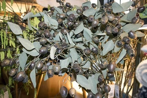Round Leaf Eucalyptus Seed Spray