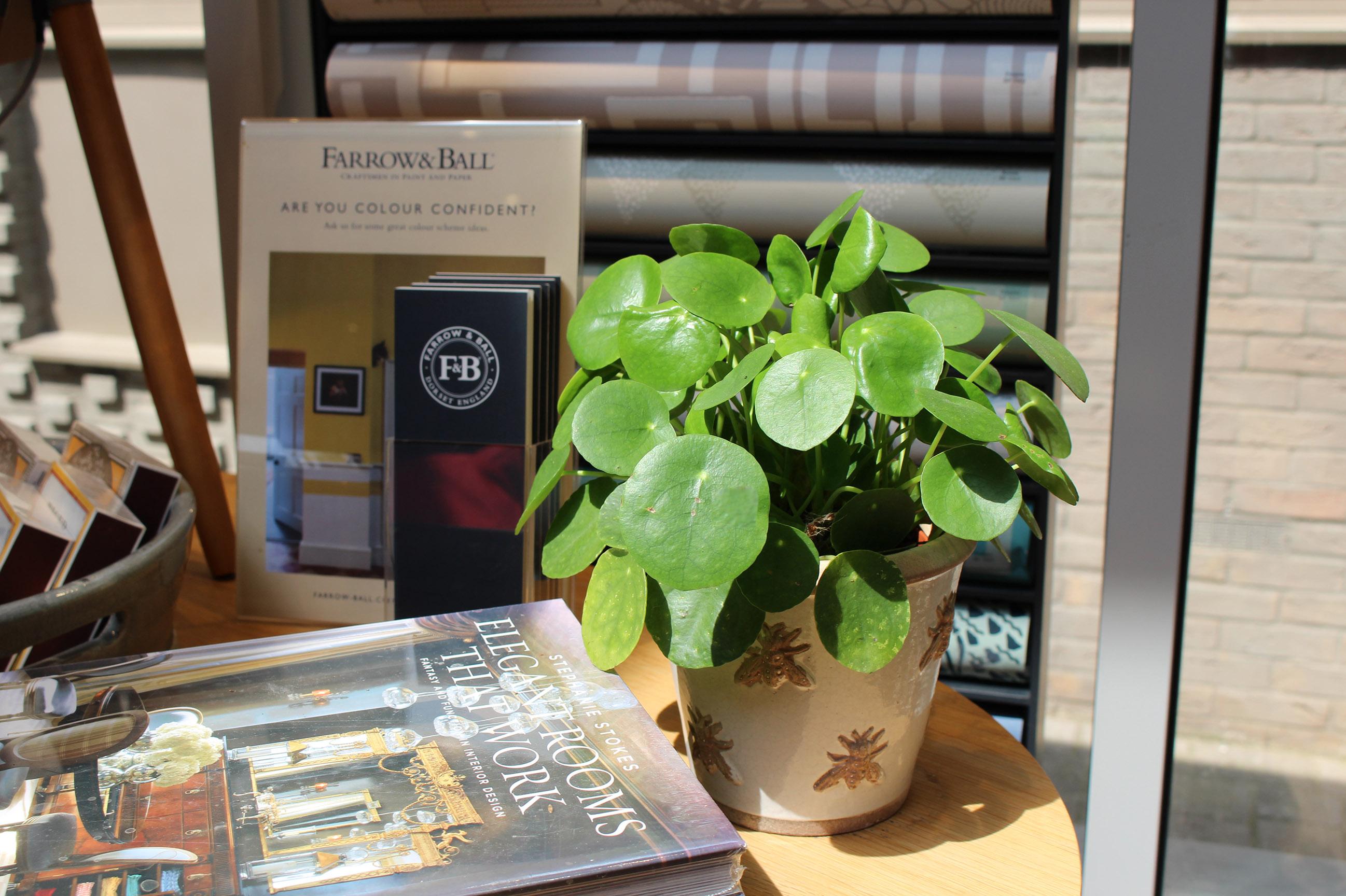 Plant, pots, green